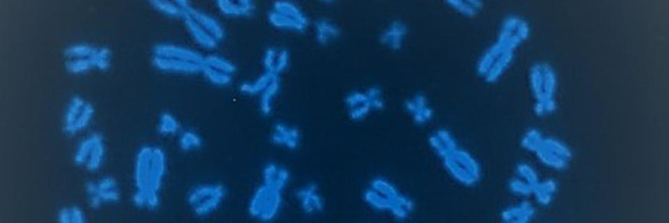 Cells1